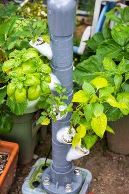 トマトとかを植えてみた